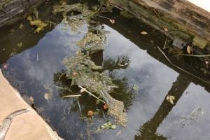 Aquatic Pest identification