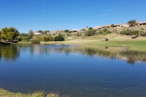 Golf Course treatments